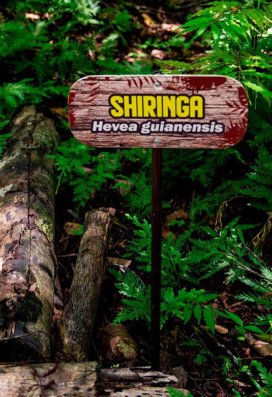 Amazon Forever Biopark