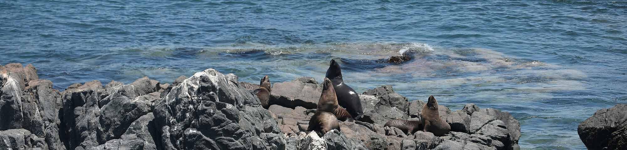 Reserva Nacional de Islas, Islotes y Puntas Guaneras - Punta de Coles