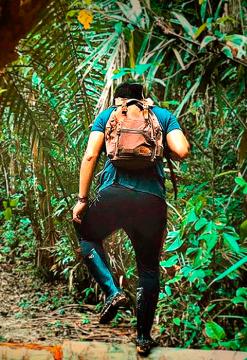 Bienvenido a la selva
