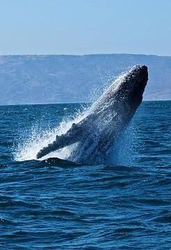 Avistamiento de ballenas, Playas y Manglares