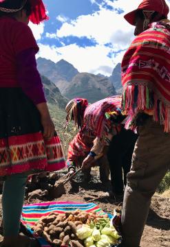 Llama Trek en Valle Sagrado