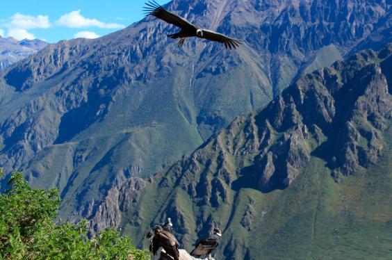 Maravillas-Peruanas-travels