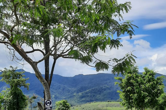 Quiquiriqui-Tours-Tarapoto