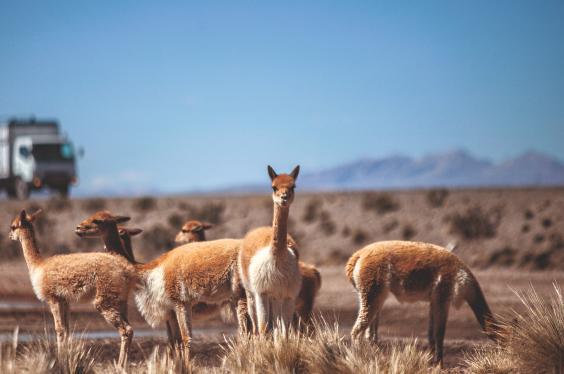Reserva Nacional Salinas y Aguada Blanca.jpg