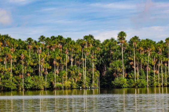 Reserva Nacional de Tambopata_PP.jpg