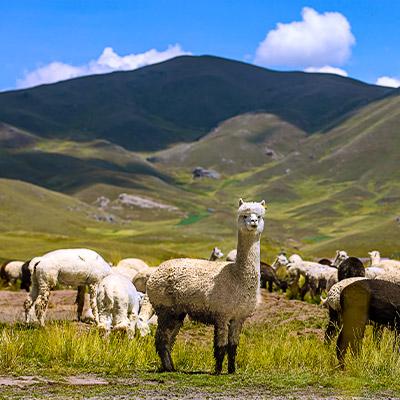 Biodiversidad en Perú: 10 animales nativos que debes conocer