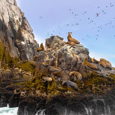 ¡Se reactivaron los paseos turísticos en las Islas Palomino!