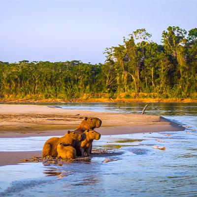 [VIDEO] Parque Nacional del Manu: 5 increíbles razones para visitarlo