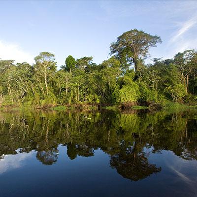 10 datos para entender la importancia de los bosques