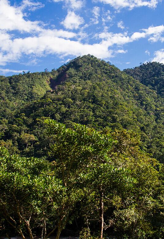 Área de Conservación Regional Cordillera Escalera