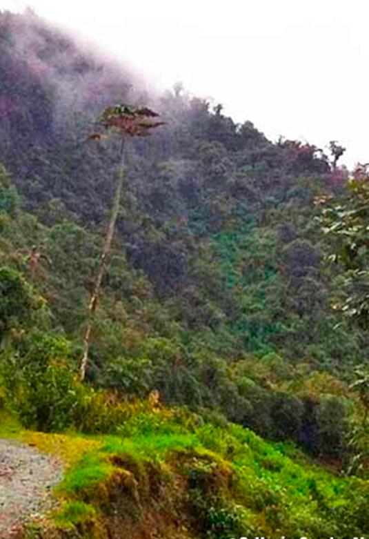 Bosque de Neblina de Carpish