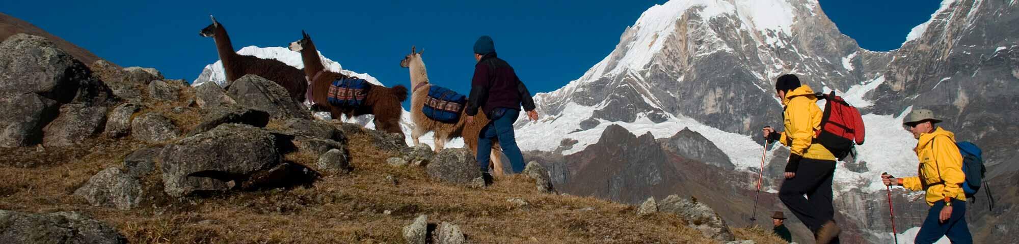 Llama Trek (Olleros-Chavín)