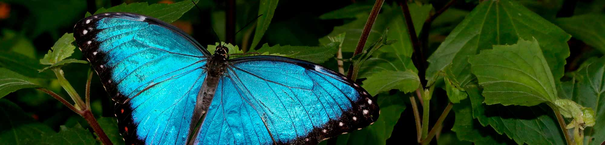 Mariposario Butterfly House