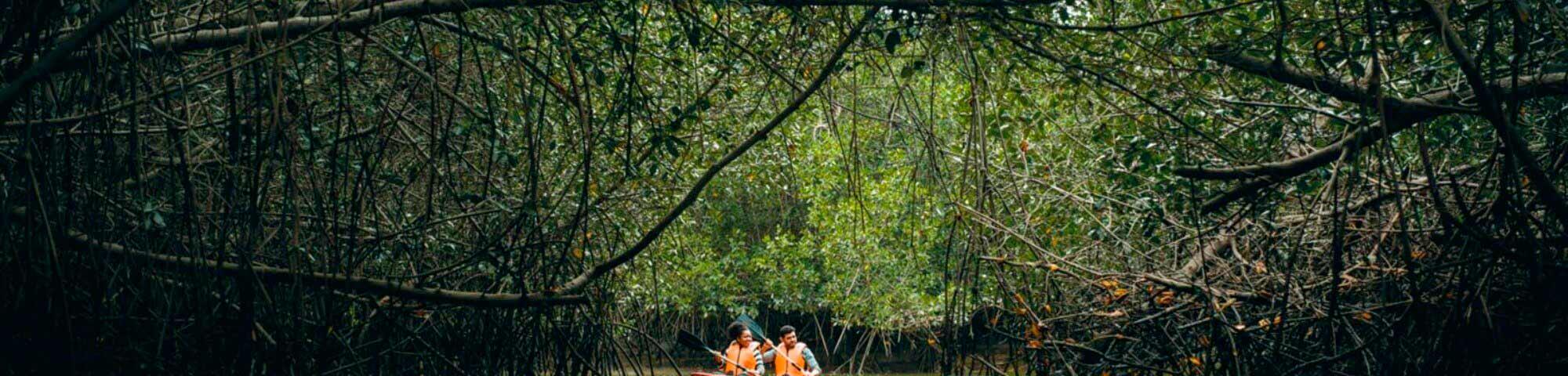 Santuario Nacional de los Manglares de Tumbes