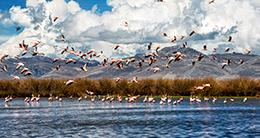 Aniversario de la Reserva Nacional de Junín