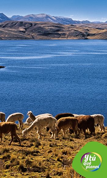 Laguna Choclococha