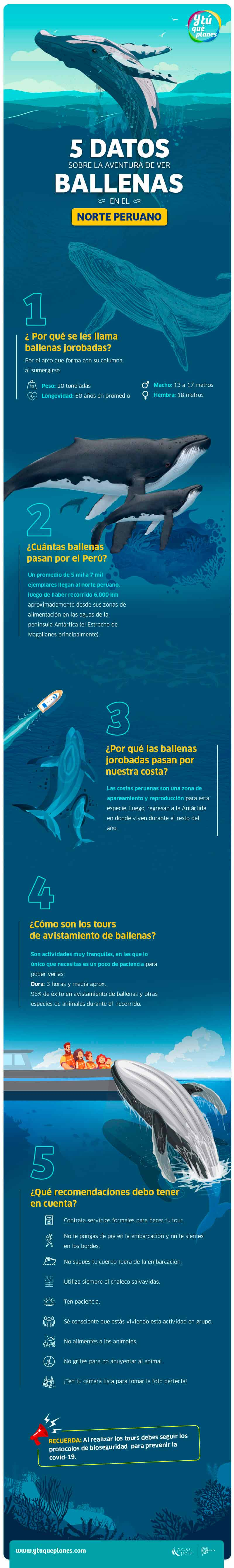 5 datos sobre Avistamiento de Ballenas