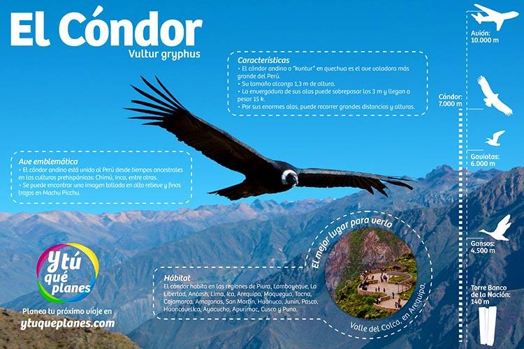 El vuelo del cóndor andino: majestuosidad en el  cielo peruano