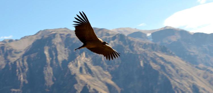 Valle del Colca obtiene máxima distinción como recurso turístico