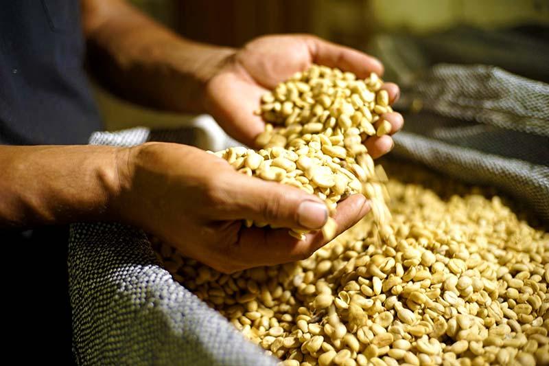 Día del Café peruano granos