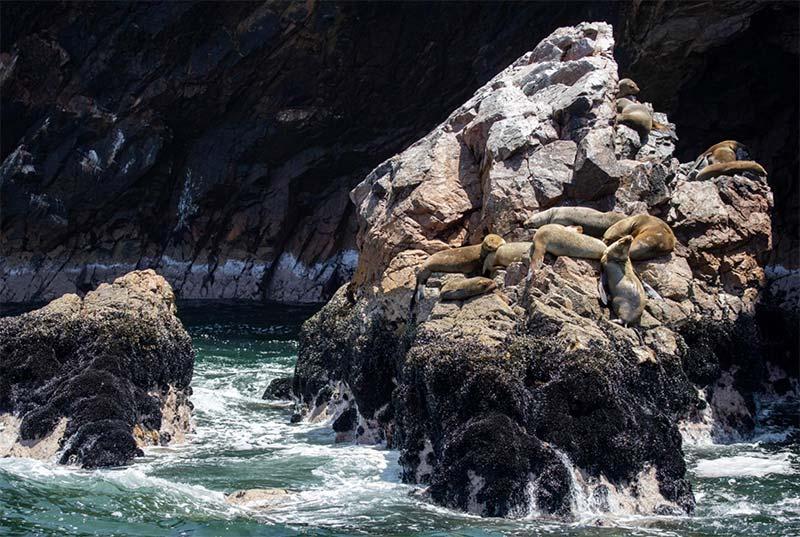 Islas Ballestas ahora cuentan con Safe Travels en Ica