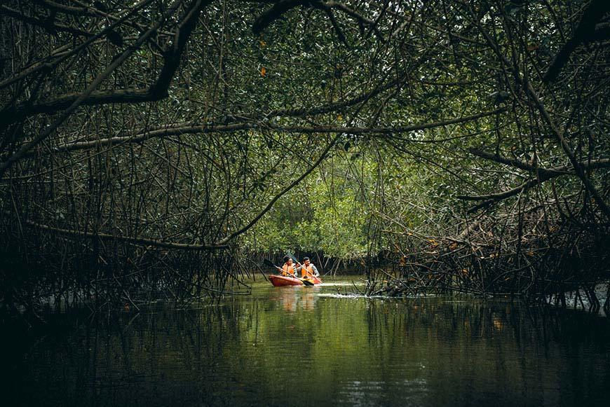 Turistas en manglares de Tumbes
