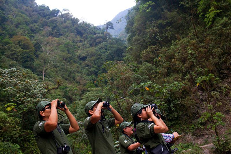 Avistamiento de aves en Parques Nacionales del Perú - Monos