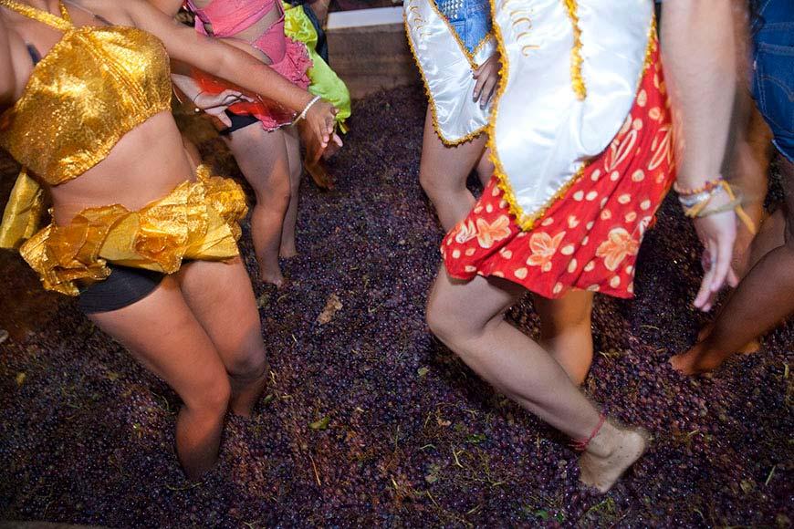Pisa de uvas en la Vendinmia