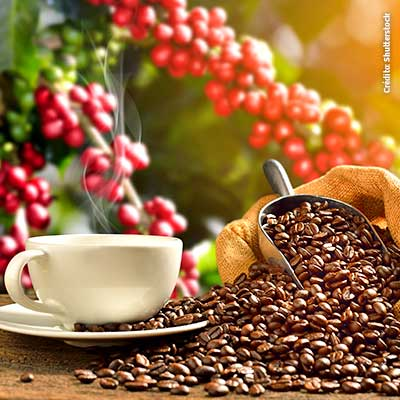 Sé parte de la Ruta del Café y conoce la importancia de este producto peruano