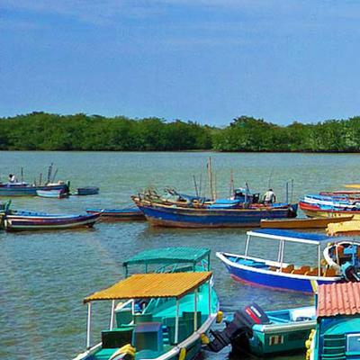 Tres razones para visitar los manglares del norte