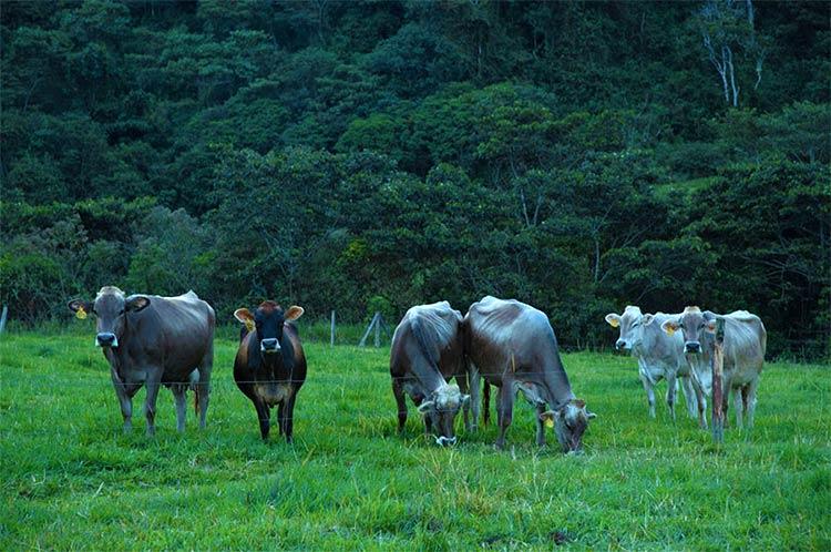 animales-campo-chacra
