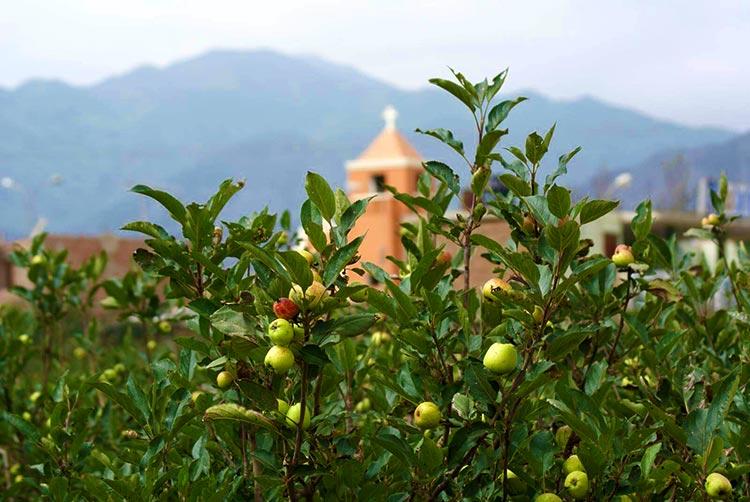 campos-frutas-sur