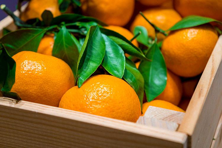 mandarina-exportacion