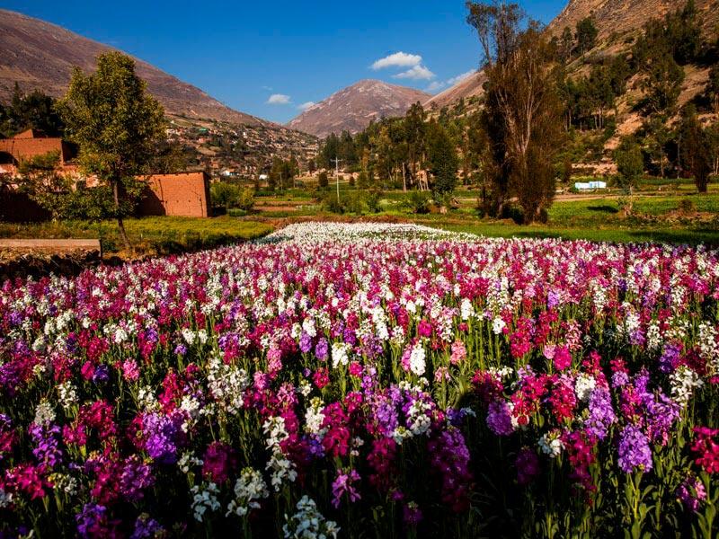 Huancayo - Cumbres centrales